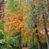 Autumn colors of Nature