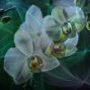 Orchid Wonder - Experiment 3