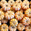 The Pumpkin Patch 10.5.13 5