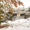 Low Force, a mix of seasons