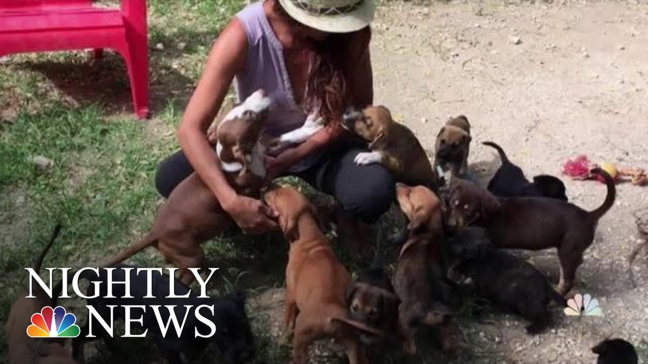 Woman Saves Dozens Of Abandoned Dogs In The Bahamas After Hurricane Dorian   NBC Nightly News